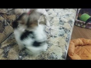 Вечерние игры собак