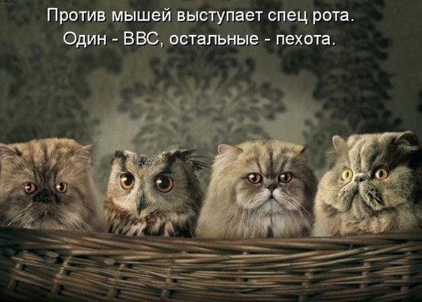 Приколы MAKzSSsknOA