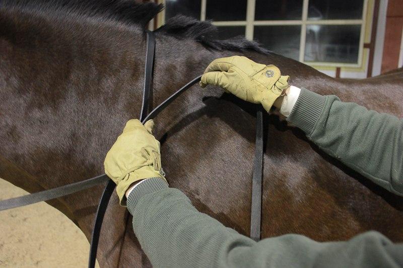 Разбор 2-х поводьев в одну руку, с возможностью управления постановлением лошади  VeiVGieoH4k