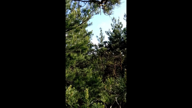 На макушке леса. Мастер-класс лазания по деревьям.