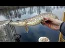 Рыбалка на Спиннинг в Ноябре Щука Окунь Fanatik