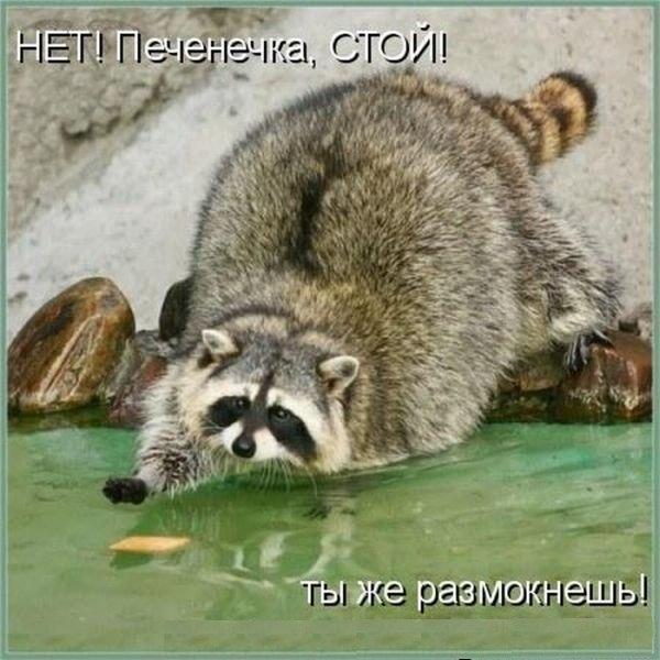 http://cs14110.vk.me/c540100/v540100856/6cdb/duzxB1tM-Tc.jpg