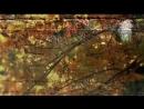 Черный кофе Листья - С ветки падающий лист Переступи порог 1987