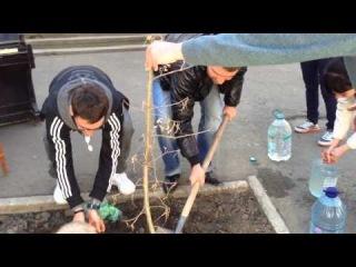 Одесское Дерево Здравомыслия