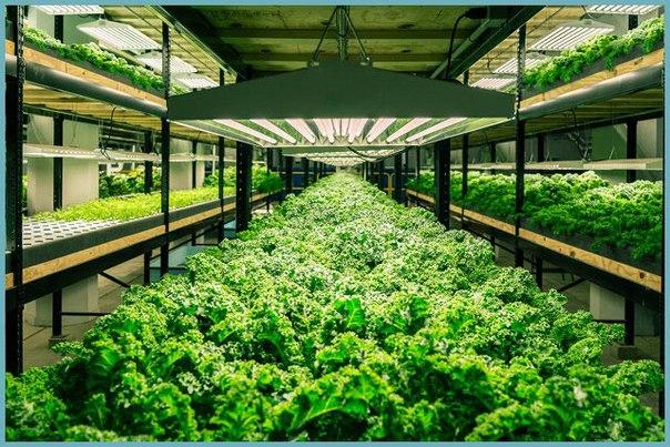 Род теплицы для выращивания овощей плодов и ранней зелени 46