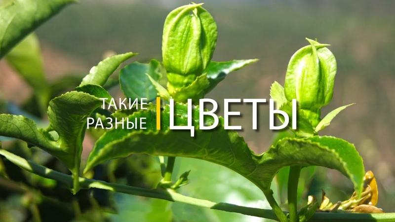 Такие разные цветы. 3d слайд-шоу с названием цветов » Freewka.com - Смотреть онлайн в хорощем качестве