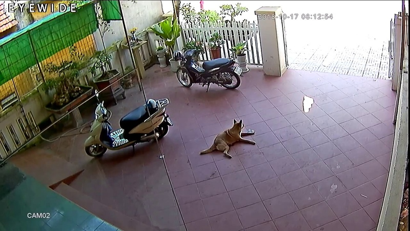 Собака возвращает потерянные деньги женщине || ViralHog