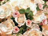 Любовь Шепилова - Розы