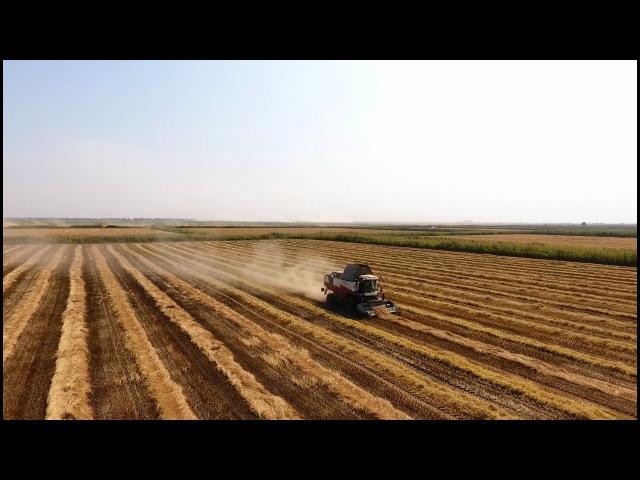 Еда живая и мёртвая, выпуск от 1 октября 2016: рис, кабачковая икра и 5 способов сохранить продукты