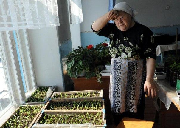 Выращиваем цветы на рассаду 143