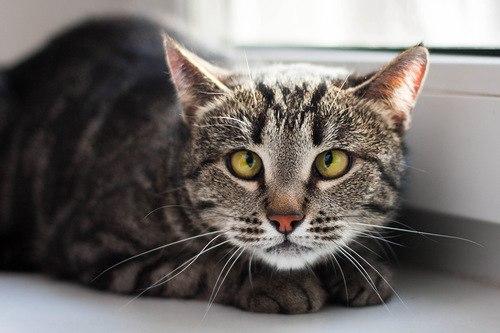 у беременной кошки черные точки вокруг сосков