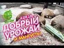 4 09 18 Акция ДОБРЫЙ УРОЖАЙ и Мангусты Новосибирский зоопарк имени Р А Шило