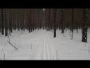 Лес Моршанск лыжи