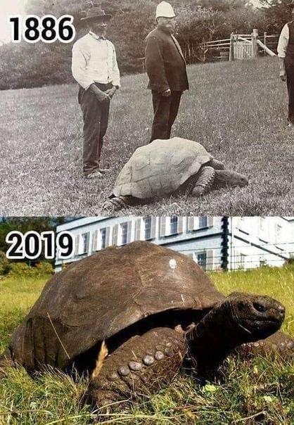 Cамое старое наземное животное в мире   Черепаха Джонатан.