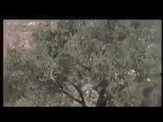 Campagne BDS Algérie - Boycott Désinvestissement Sanctions contre Israël.mp4