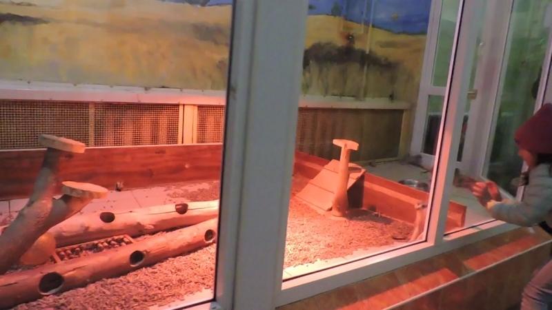 Челябинский зоопарк. Планета обезьян