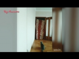 Cats Amazing Reaction To Magic Trick _ What the fluff challenge Cat