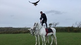 Jonathan Marshall shows us why he is the world's best show falconer.