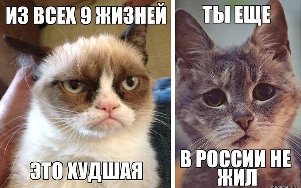 В аннексированном Крыму стартует первая после оккупации перепись населения - Цензор.НЕТ 8947