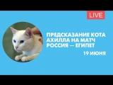 Прогноз кота Ахилла на матч Россия — Египет. Онлайн-трансляция