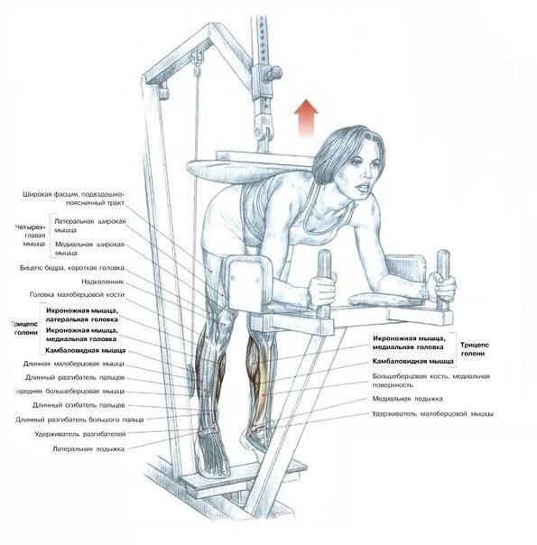 Упражнения на трицепс - Fit4life ru