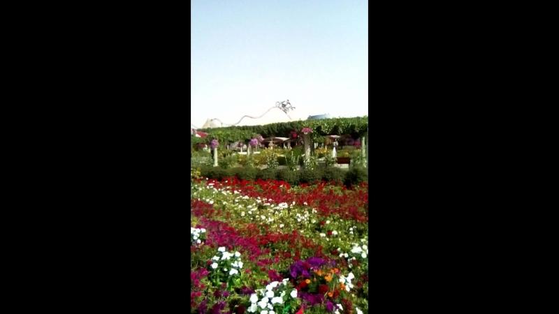 эмираты 211сад цветов