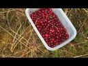 За ягодами на болото!