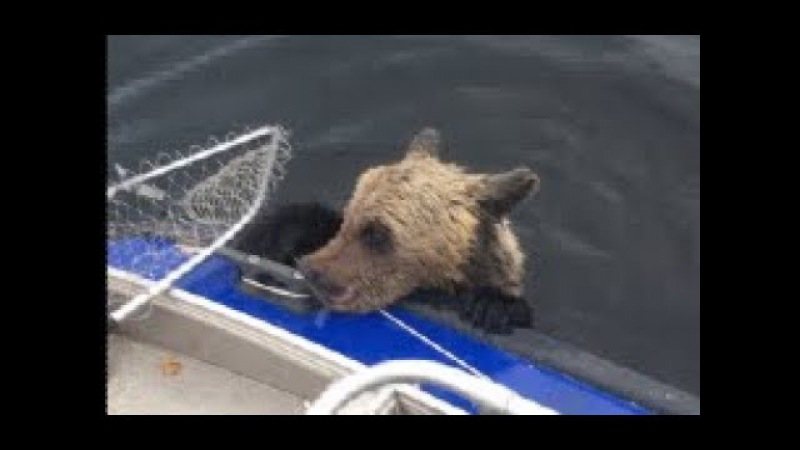 Bears on board! Russian fishermen save 2 drowning cubs from water