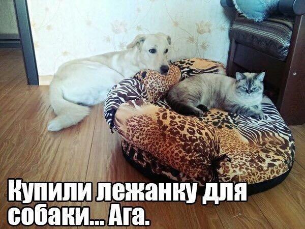 https://pp.vk.me/c543101/v543101476/17bb6/FsVt2d606uo.jpg