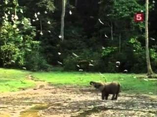 BBC Мир природы. Птица Говорун (говорящие попугаи)