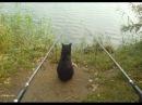 Подборка приколов на рыбалке 3! Funny fishing compilation 3!