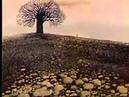 El árbol y la gata - 1983 - Animacion Rusa