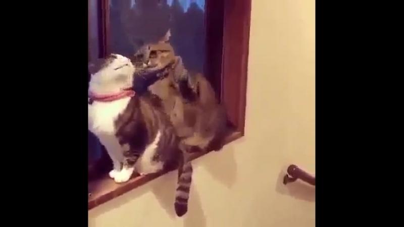 Блох наловил паскуда шлялся с кошками помойными