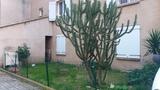 Растения в палисадниках местных жителей. Корсика!