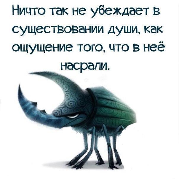 https://pp.vk.me/c543103/v543103567/215e0/fbRExPBYfnI.jpg