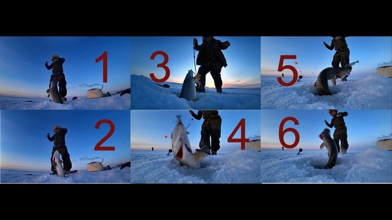 Огромные щуки на жерлицы в Якутии! Fishing pike Yakutia