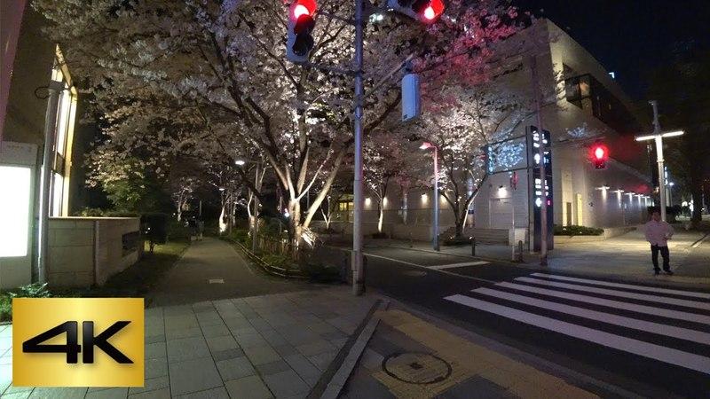 🌸TOKYO CHERRY BLOSSOM WALK 2018 Roppongi Sakurazaka Down Night 六本木さくら坂 下り 夜桜 4K