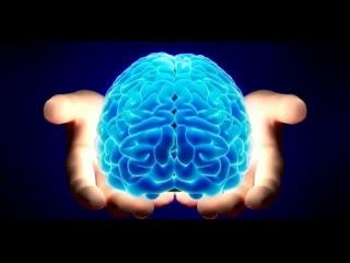 7 удивительных фактов о мозге