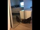 Пёс и зеркало