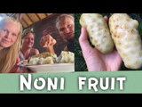 NONI FRUIT HOW TO EAT HEALTH BENEFITS OF NONI FRUIT