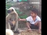 Обезьяны и малыш