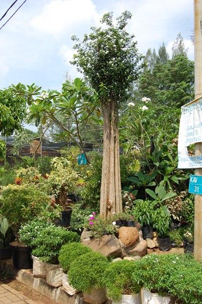 Помогайте - ландшафтный дизайн в Индонезии :) -uJ_4YiNePI