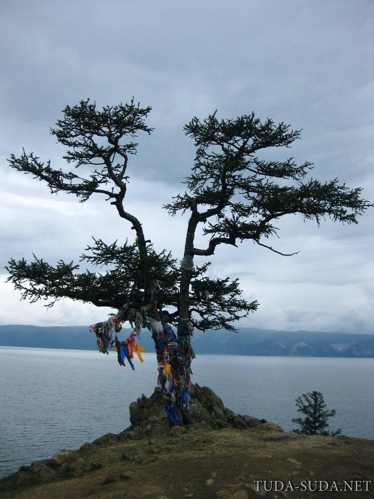 Дерево шаманское Байкал