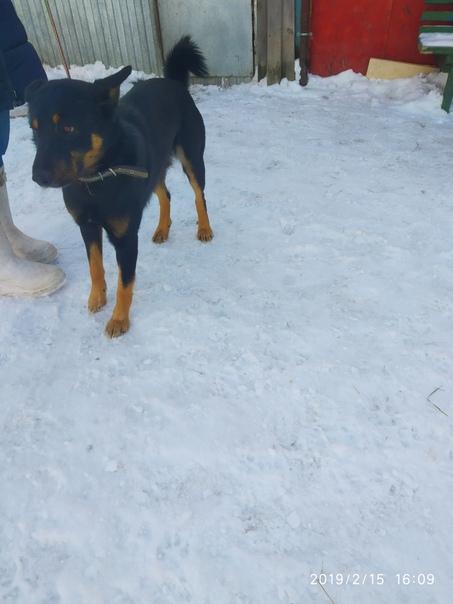 Первоуральское общество защиты животных. Собаки, отловленные в посёлке...