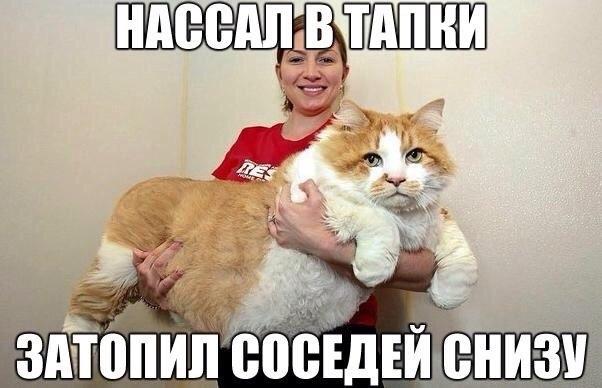 http://cs7061.vk.me/c7008/v7008384/22ffb/A7gAZAo3x6c.jpg