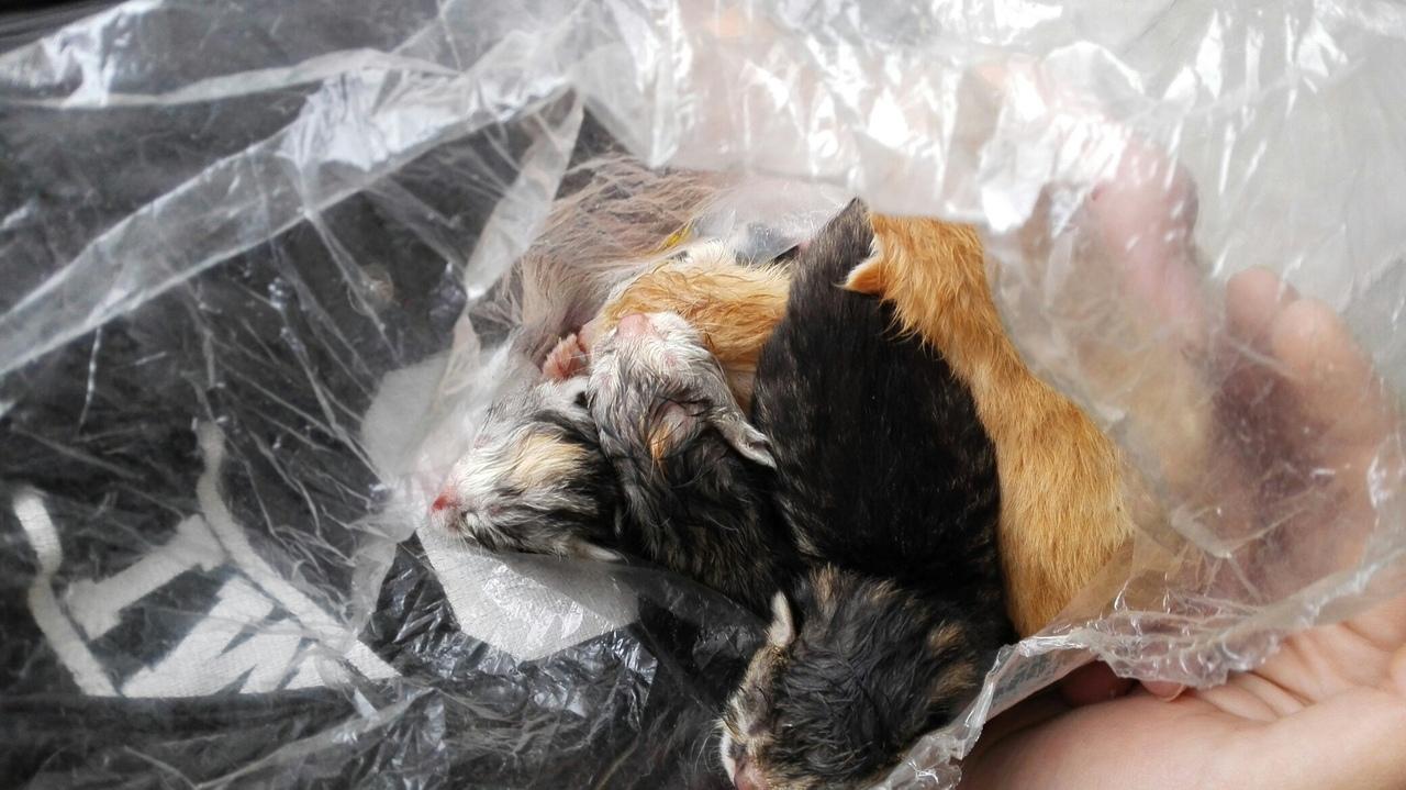 Девушки студентки спасли котят, которых кто-то выбросил в завязанном пакете в мусор