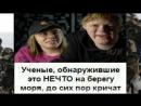 для_свинорыла_Full HD.mp4