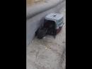 Будни приюта Отлов подвальных котят