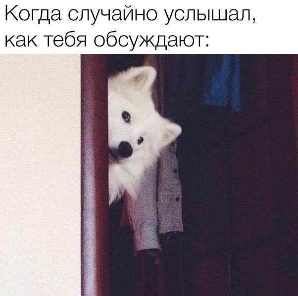 Результаты работы Луценко буду видны к сентябрю-октябрю, - Геращенко - Цензор.НЕТ 2752