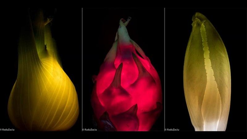 Раду Зачью Radu Zaciu свет внутри свежий взгляд на привычные овощи и фрукты
